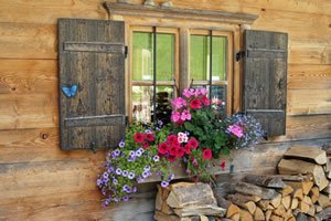 garten im august gartenkalender tipps zur pflanzenpflege. Black Bedroom Furniture Sets. Home Design Ideas