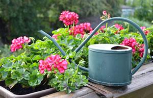 balkonpflanzen f r sonnige und schattige standorte. Black Bedroom Furniture Sets. Home Design Ideas