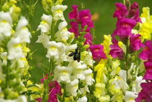Garten blumen  Beliebte Gartenblumen - Liste ein- und mehrjähriger Sorten