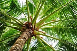 winterharte palmen beliebte garten palmenarten. Black Bedroom Furniture Sets. Home Design Ideas