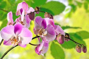 orchideen pflege umtopfen gie en schneiden. Black Bedroom Furniture Sets. Home Design Ideas